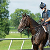 Caption: Alvaro Quinteros on unnamed 2018 Greenfield d'Oro. <br /> A native of Oklahoma, Heath started working at WinStar Farm on October 10, 2014, and became the farm trainer in October of 2018. Presently he has about 100 horses in training at the WinStar Farm training center, where they have a 7 1/2-furlong main track and 3/4 of a mile undulating turf gallop.<br /> Daily Life series on Destin Heath, farm trainer at WinStar Farm on Aug. 11, 2020 WinStar Farm in Versailles, KY.