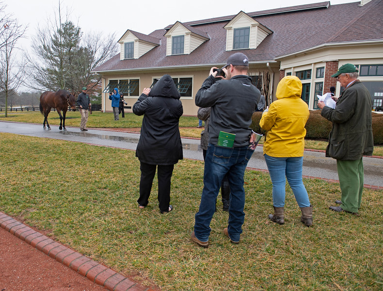 Quality Road is paraded as media looks on. Lane's End Farm Press Pass 2020 on<br /> Feb. 4, 2020 Lane's End Farm in Versailles, KY.