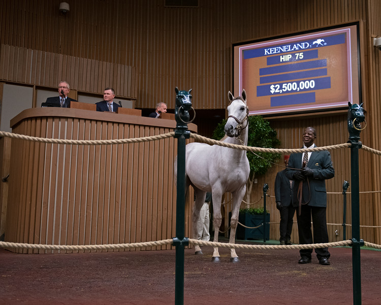 The Tapit colt consigned as hip 75 in the ring at<br /> at the Keeneland September Sale.