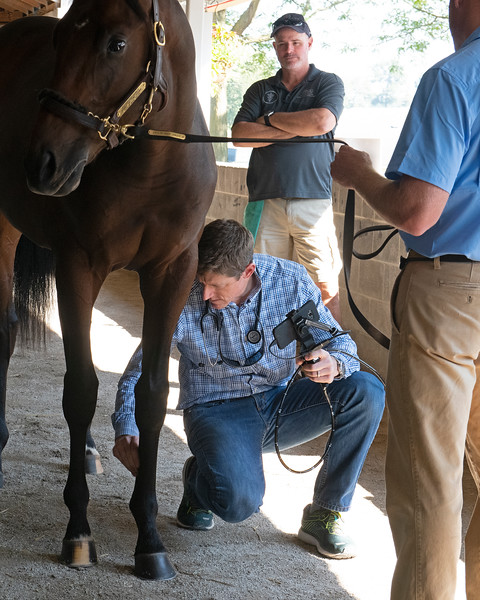 Keith Latson DVM doing a yearling exam at the Keeneland September Sale.