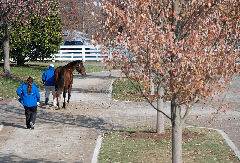 Scene on Nov. 22, 2019 Keeneland in Lexington, KY.