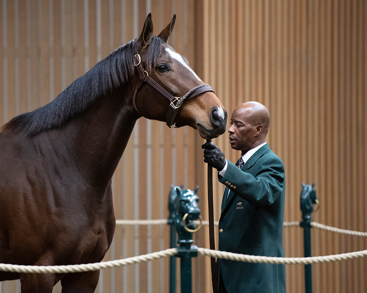 Hip 1637 Ashy Taty from Taylor Made<br /> Keeneland January Horses of all ages sales on<br /> Jan. 17, 2020 Keeneland in Lexington, KY.