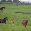 Caption: Mares and foals running in field.<br /> Mill Ridge Farm scenes, near Lexington, Ky.,  on April 15, 2020 Mill Ridge in Lexington, KY.