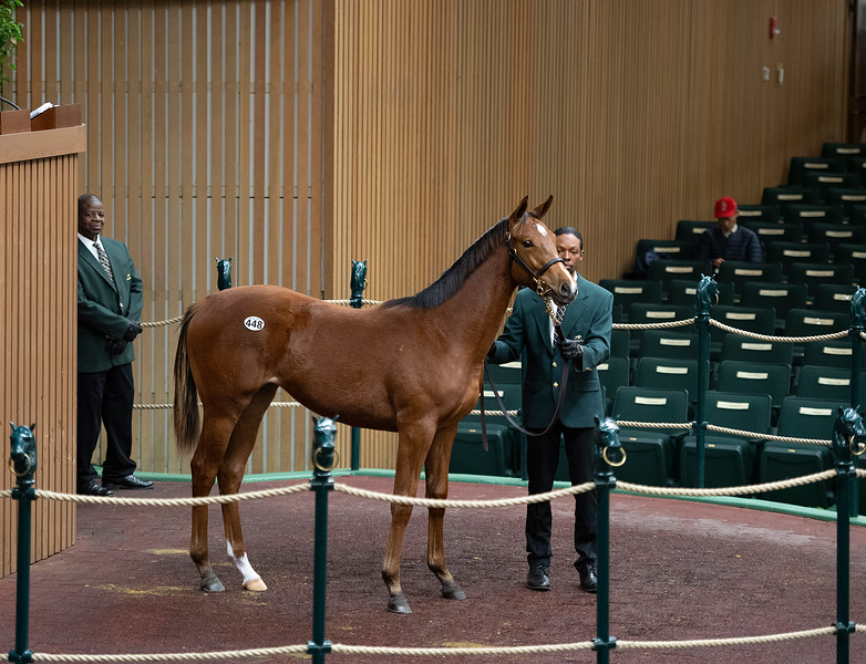 Hip 448 filly by Into Mischief from Silent Circle and Eaton Sales agent<br /> Keeneland January Horses of all ages sales on<br /> Jan. 14, 2020 Keeneland in Lexington, KY.