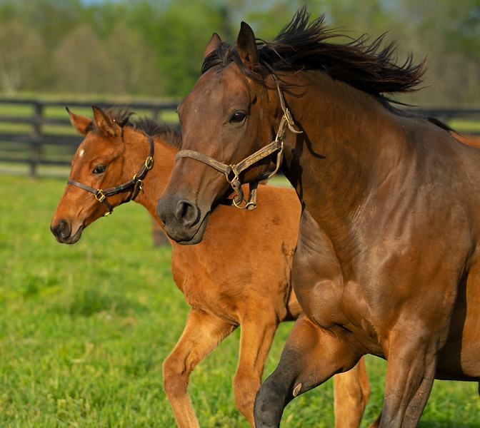 Caption: Natural Rush and 2020 Justify filly<br /> Mares, foals, yearlings, scenes at Ashview Farm near Versailles, Ky., on April 28, 2020 Ashview Farm in Versailles, KY.