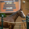 Hip 4581<br /> at the Keeneland September sale