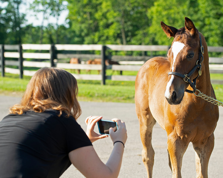 Caption:  Claire Crosby takes video of<br /> Diva Delite's  2020 colt by Justify born on May 11, at Hunter Valley Farm on July 8, 2020 Hunter Valley Farm in Versailles, KY.