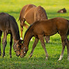 Caption: (L-R) Mayhaw and her Midnight Lute filly and Malibu Moon out of St. John's River colt<br /> Mares and foals on Heaven Trees Farm near Lexington, Ky., on May 22, 2020 Heaven Trees in Lexington, KY.