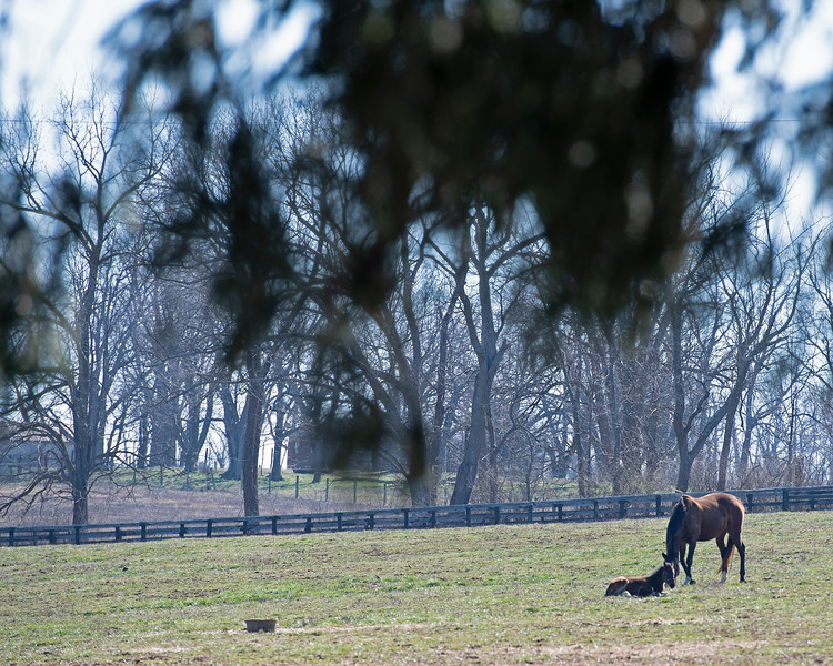 Scene at Ashleigh Stud with Warrior Cat and her McClean's Music foal on Feb. 22, 2020 Ashleigh Stud in Paris, KY.
