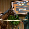 Hip 2674<br /> at Keeneland.