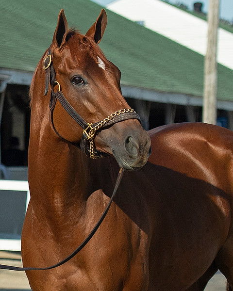 Monomoy Girl<br /> The morning after Authentic wins the Kentucky Derby (G1) at Churchill Downs, Louisville, KY on September 5, 2020.