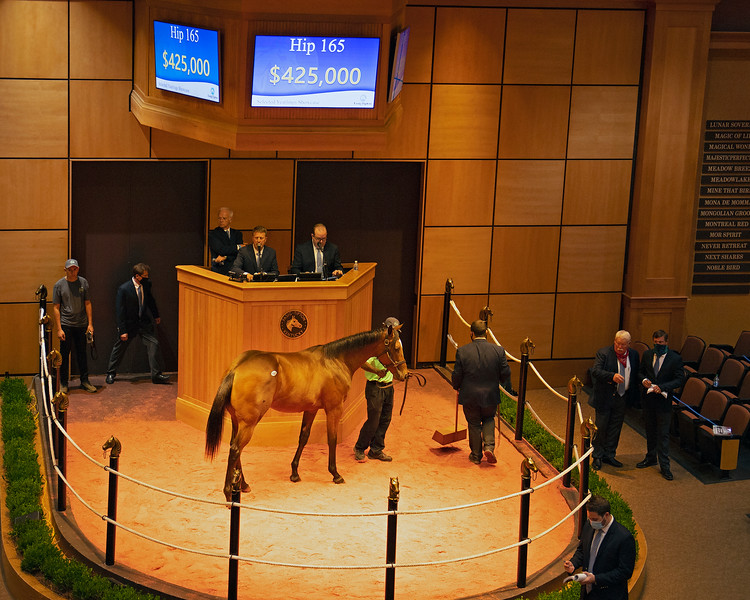Hip 165 filly by Into Mischief out of Jazz Flute from Machmer Hall Sales<br /> Fasig-Tipton Selected Yearlings Showcase in Lexington, KY on September 9, 2020.