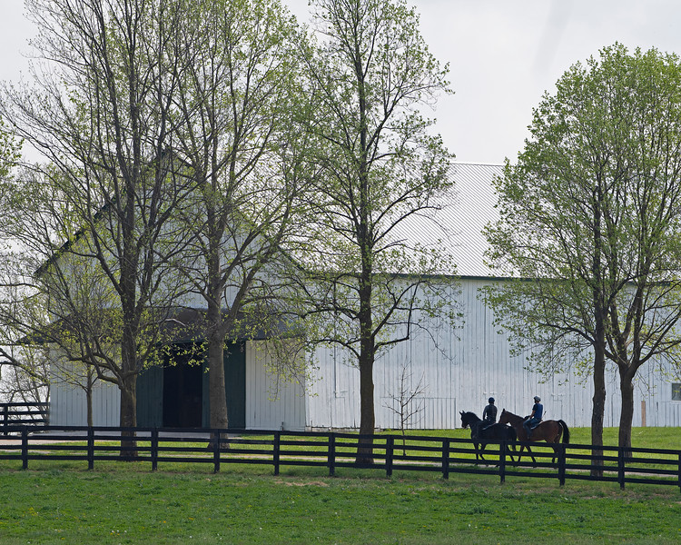 Caption: horses return to barn after training<br /> Training at Silver Springs Training, part of Silver Springs Stud, near Lexington, Ky.,  on April 8, 2020 Silver Springs in Lexington, KY.
