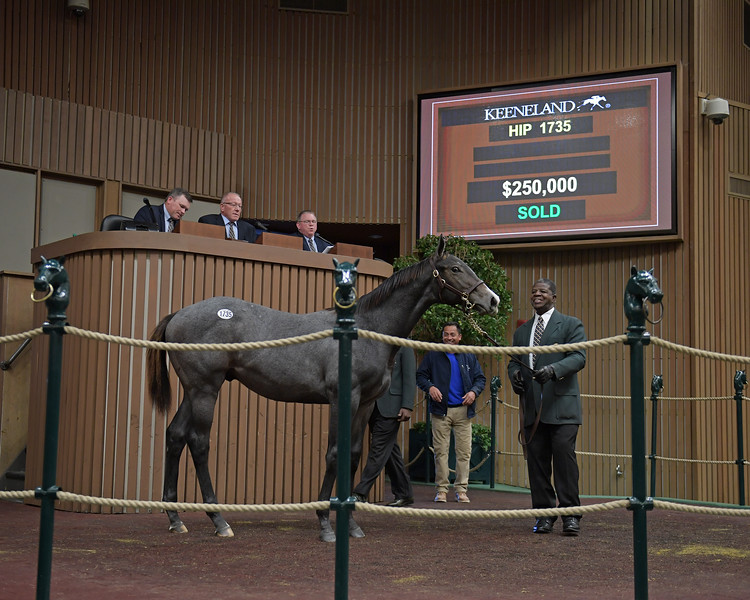 Hip 1735 colt by Connect from Wild Hoots<br /> on  Nov. 10, 2019 Keeneland in Lexington, KY.
