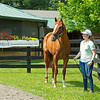 Caption: with Liz Crow<br /> British Idiom at WinStar Farm near Versailles, Ky., on June 16, 2020 WinStar Farm in Versailles, KY.