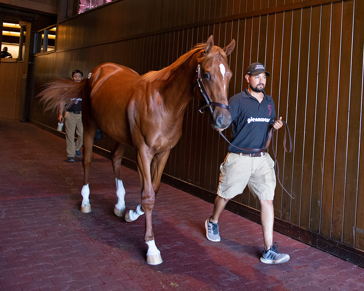 The Curlin colt consigned as Hip 431 at the Keeneland September Sale