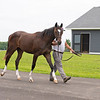 Caption: yearling filly by Curlin.<br /> Hollywood Story at Starwood Farm near Versailles, Ky., on June 30, 2020 Starwood Farm in Versailles, KY.