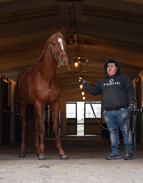 Inside the barn before heading outside. At 8 am Country House is lead by Juvencio Escobar to his paddock where he spends the day,  at Blackwood Stables on<br /> Feb. 27, 2020 Blackwood Stables in Versailles, KY.