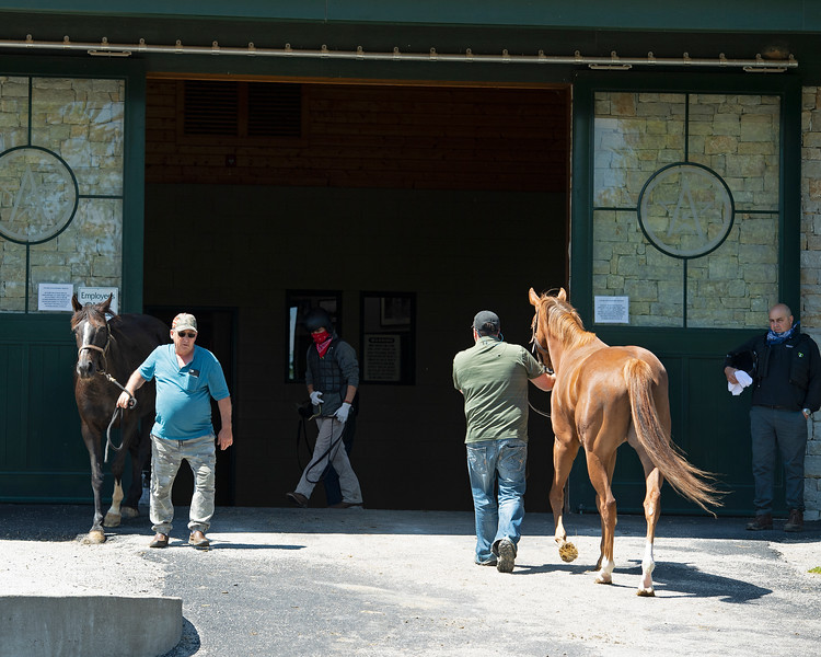 Caption: mares are lead in and out of the WinStar breeding shed as WinStar stallion manager Larry McGinnis, right, looks on.<br /> Rusty Ford at WinStar near Versailles, Ky., on May 1, 2020 WinStar in Versailles, KY.