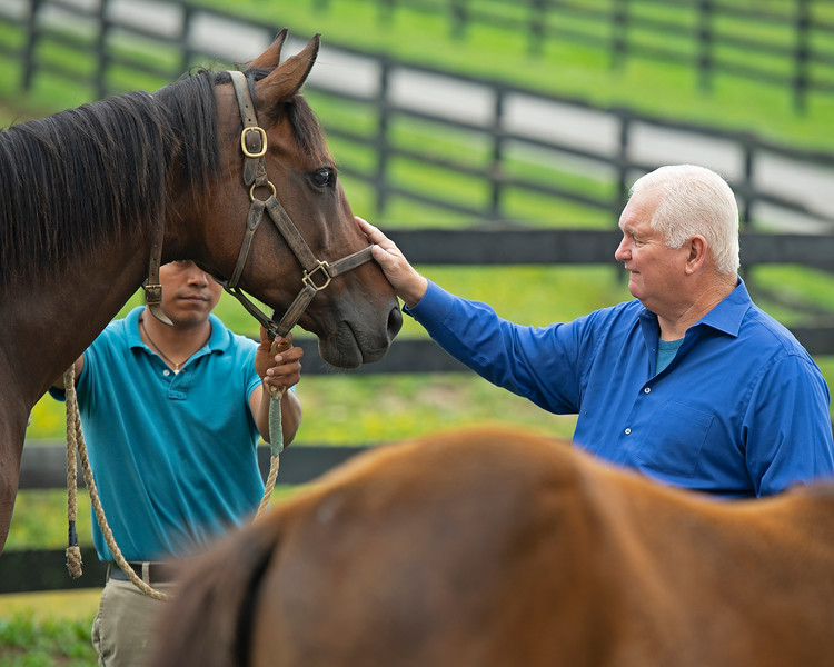Caption: petting She's a Warrior. <br /> Lee and Susan Searing look over their bloodstock (mares, foals, yearlings) at Springhouse Farm near Nicholasville, Ky., on June 22, 2020 Springhouse Farm in Nicholasville, KY.