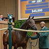 Hip 3583<br /> at the Keeneland September sale