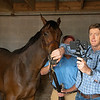 Keith Latson DVM, with Logan Payne holding horse, doing a video endoscopic exam of HIp 158 at Taylor Made<br /> at the Keeneland September Sale.