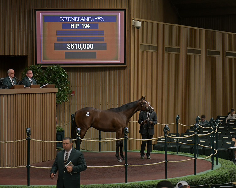 The Pioneerof the Nile colt consigned as Hip 194 in the ring at the Keeneland September Sale