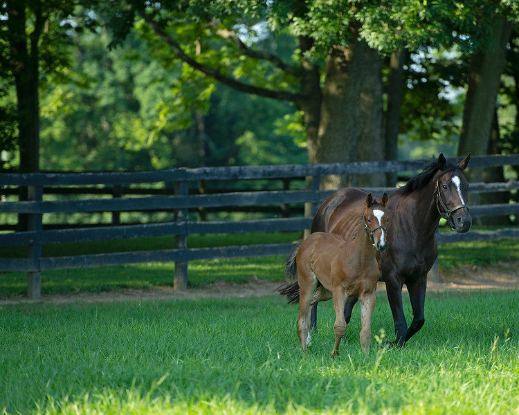 Caption: <br /> Diva Delite, dam of Midnight Bisou, with her 2020 colt by Justify born on May 11, at Hunter Valley Farm on July 8, 2020 Hunter Valley Farm in Versailles, KY.