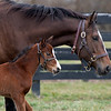 The first foal, a filly by Justify from the mare Foreign Affair, was born on Jan. 3, 2020, at Amaroo Farm for owners Audley Farm on Jan. 11, 2020 Amaroo Farm in Lexington, KY.