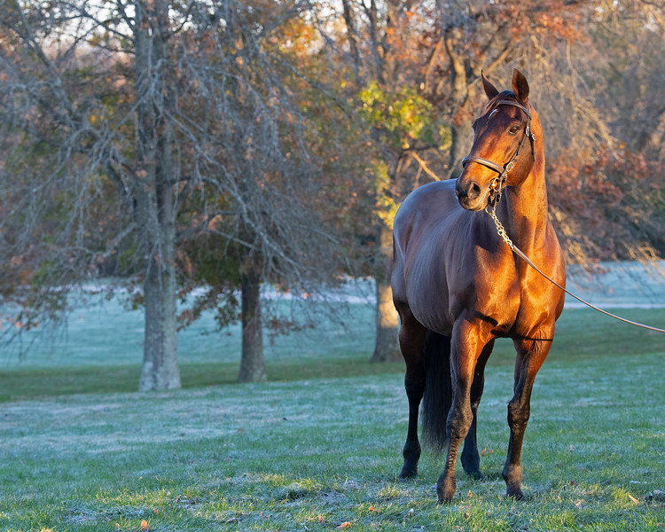 Broken Vow at<br /> Pin Oak Stud<br /> at  Nov. 8, 2019 Pin Oak Stud in Versailles, KY.