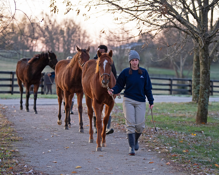Chestnut weanling in front is half to Perfect Alibi (Flatter filly from No Use Denying). Next year's crop of yearlings (currently weanlings) at<br /> Pin Oak Stud<br /> at  Nov. 8, 2019 Pin Oak Stud in Versailles, KY.