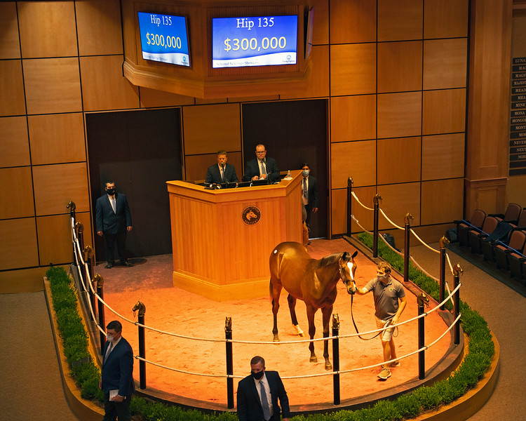 Hip 135 colt by Tiznow out of Eternal Grace from Hunter Valley<br /> Fasig-Tipton Selected Yearlings Showcase in Lexington, KY on September 9, 2020.