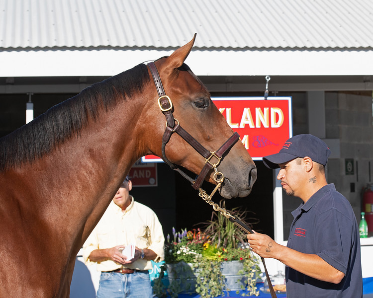 Hip 498 filly by American Pharoah out of Leslie's Lady at Clarkland Farm consignment<br /> at the Keeneland September Sale.