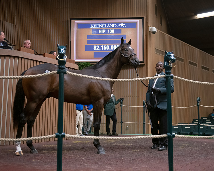 The Medaglia d'Oro colt consigned as hip 138 at the Keeneland September Sale.