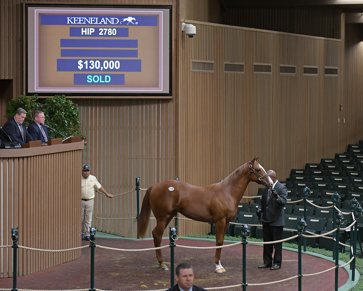 The Speightster filly consigned as Hip 2780<br /> at Keeneland September sale.