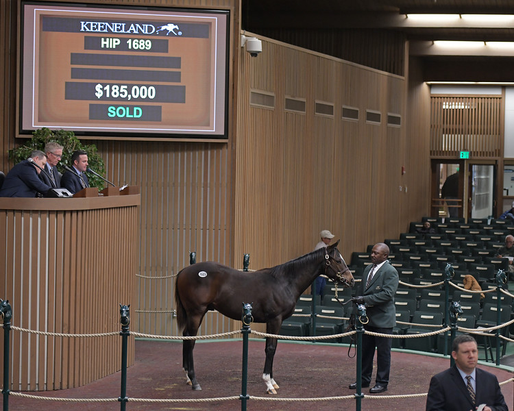 Hip 1689 colt by Street Sense from Take a Memo<br /> on  Nov. 16, 2019 Keeneland in Lexington, KY.