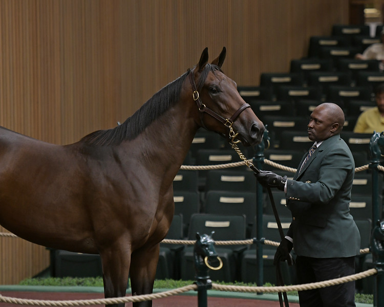 The American Pharoah filly consigned as Hip 321 at Betz Thoroughbred's consignment to the Keeneland September Sale