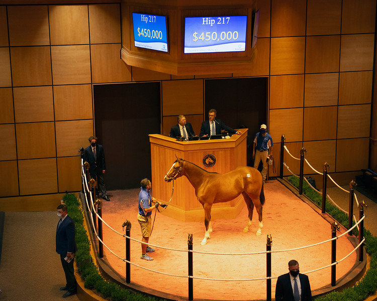Hip 217 colt by Into Mischief out of Lost Empire from Paramount Sales<br /> Fasig-Tipton Selected Yearlings Showcase in Lexington, KY on September 9, 2020.