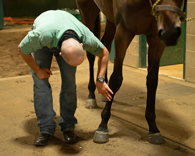 Caption:  checking the legs of Airman. Heath looks at all of the breezers, shippers, and horses that got his attention on track the day before. Lots of back and forth from physical exam to set board. <br /> A native of Oklahoma, Heath started working at WinStar Farm on October 10, 2014, and became the farm trainer in October of 2018. Presently he has about 100 horses in training at the WinStar Farm training center, where they have a 7 1/2-furlong main track and 3/4 of a mile undulating turf gallop.<br /> Daily Life series on Destin Heath, farm trainer at WinStar Farm on Aug. 11, 2020 WinStar Farm in Versailles, KY.