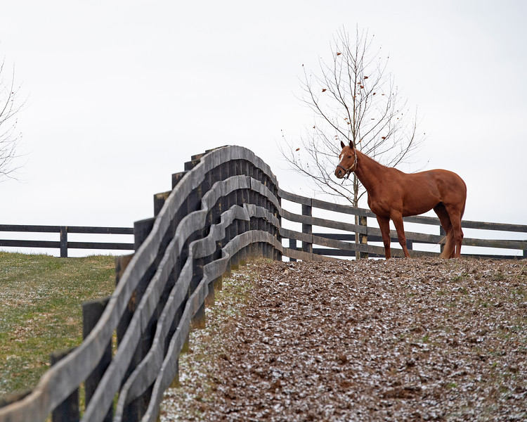 Country House in his paddock where he spends the day,  at Blackwood Stables on<br /> Feb. 27, 2020 Blackwood Stables in Versailles, KY.