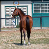 Oscar Performance at Mill Ridge Farm in Lexington, Ky., on March 20, 2019. OP in front of breeding shed which also has Horse Country educational features including plaques behind OP and to left of breeding shed door.