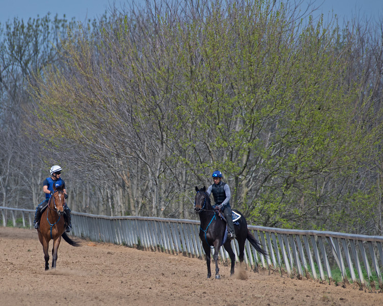 Caption: (L-R): Trendy Neve filly and Quantitativbreezin filly on track after gallops.<br /> Training at Silver Springs Training, part of Silver Springs Stud, near Lexington, Ky.,  on April 8, 2020 Silver Springs in Lexington, KY.