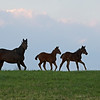 Caption: mare and foals running (other mother out of image)<br /> Mill Ridge Farm scenes, near Lexington, Ky.,  on April 15, 2020 Mill Ridge in Lexington, KY.