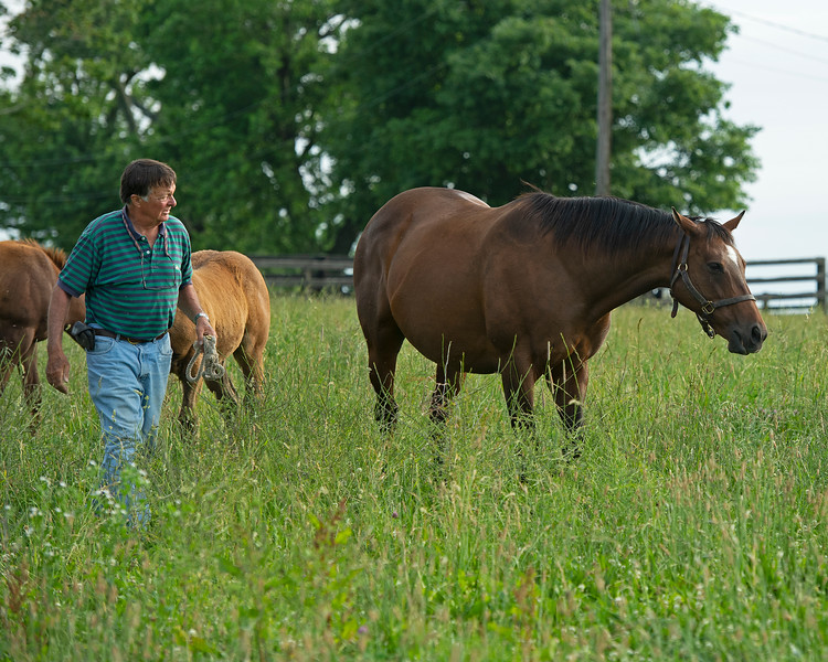 Caption: Alfred Nuckols in field of mares and foals on Hurstland Farm<br /> Mares Cayuga's Waters and Glorious View owned by Brant Laue boarded at Alfred Nuchols' Hurstland Farm near Midway, Ky., on June 9, 2020 Brant Laue in Versailles, KY.
