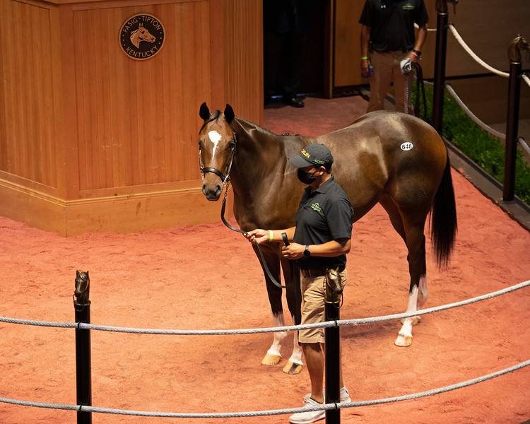 Hip 648 filly by Curlin out of Hollywood Story RNA<br /> Fasig-Tipton Selected Yearlings Showcase in Lexington, KY on September 10, 2020.