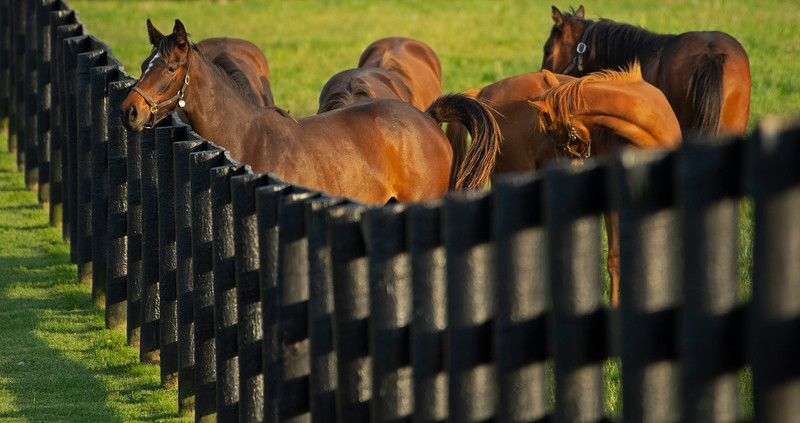 Caption: yearlings<br /> Mares, foals, yearlings, scenes at Ashview Farm near Versailles, Ky., on April 28, 2020 Ashview Farm in Versailles, KY.