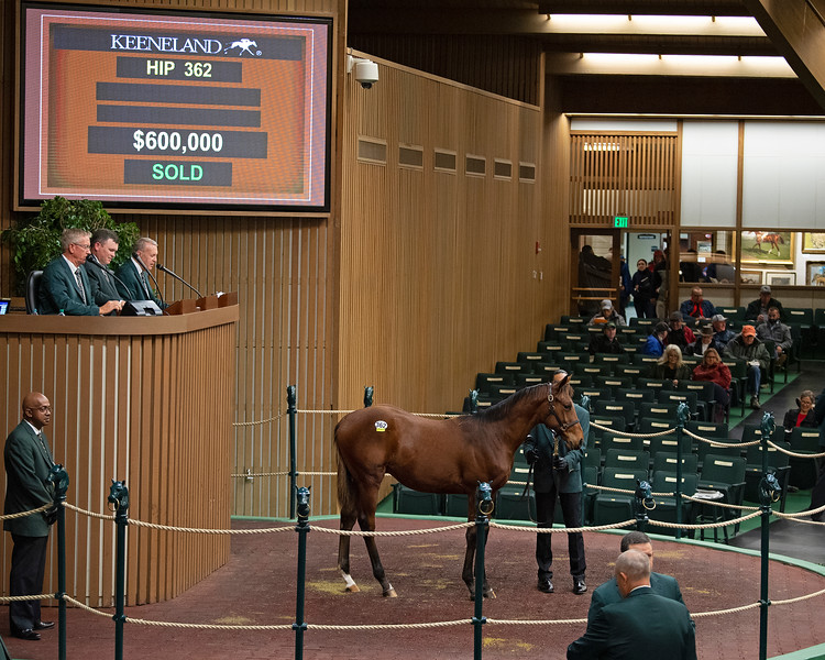 Hip 362 colt by Quality Road from Princess Aspen <br /> at  Nov. 7, 2019 Keeneland in Lexington, KY.