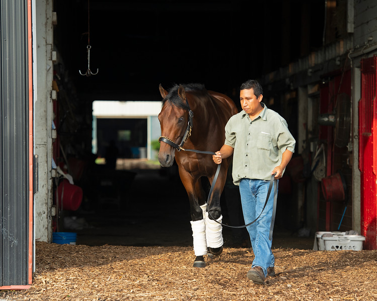 Caption: Art Collector with barn foreman Jose Garcia<br /> Bruce Lunsford at Skylight Training Center with his horse Art Collector and trainer Tommy Drury on Aug. 12, 2020 Skylight Training Center in Prospect, KY.