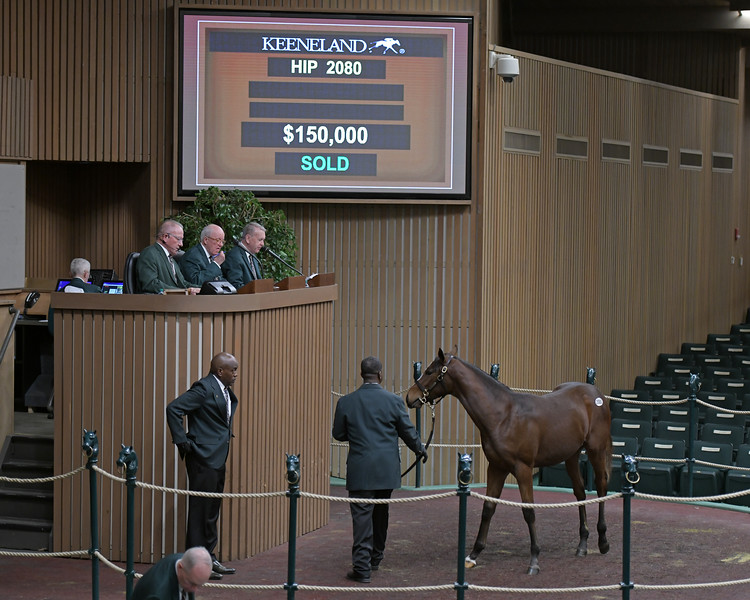Hip 2080 colt by Constitution from Spikes<br /> on  Nov. 17, 2019 Keeneland in Lexington, KY.