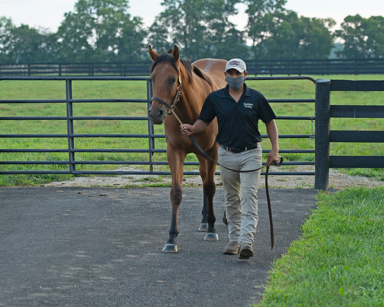 Caption:  Obner Martinez with Quality Road colt out of Wasted Tears.<br /> Aidan and Leah O'Meara at Stonehaven Steadings near Versailles, Ky. on Aug. 7, 2020 Stonehaven Steadings in Versailles, KY.